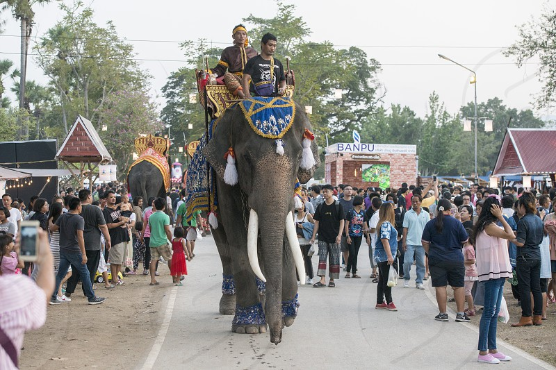 a elephant at the Loy Krathong Festival in the Historical Park in Sukhothai in the Provinz Sukhothai in Thailand.   Thailand Sukhothai November 2018 photo