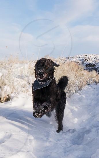 Winter dog snow photo