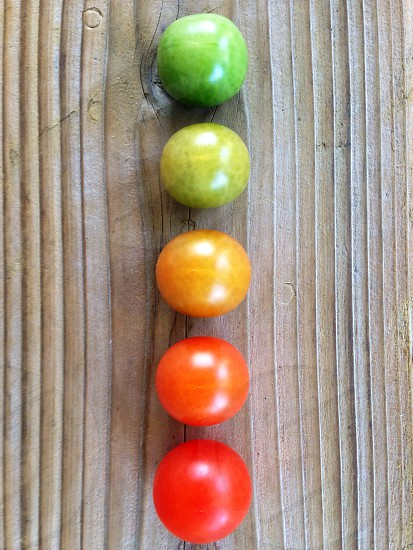 Changing colors of tomatoes photo