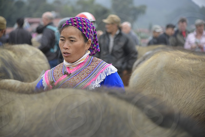 An ethnic woman is choosing to buy buffalo at the highland market on Sunday morning. photo