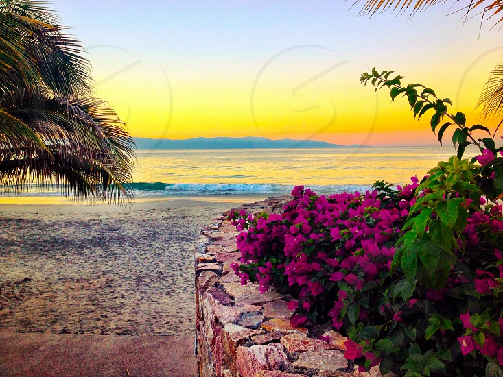 Beach at sunrise with palms and flowers photo