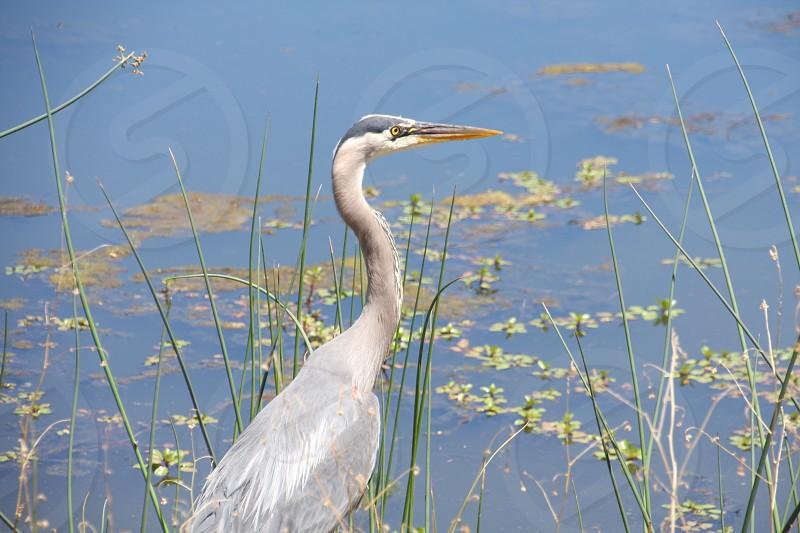bird pond photo