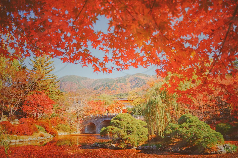 Autumn in Korea  photo