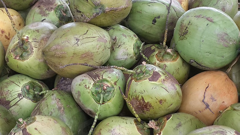 Coconuts naturally beautiful. photo