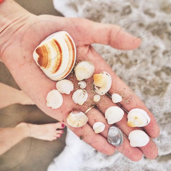 shells vietnam beach seashells ocean hand photo