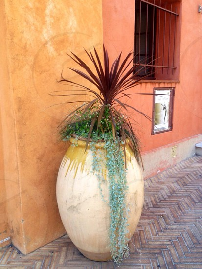 brown and green plant in white and brown clay jar beside orange wall photo