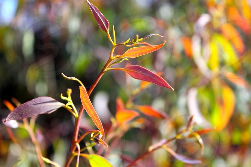 Tiny orange leaves photo