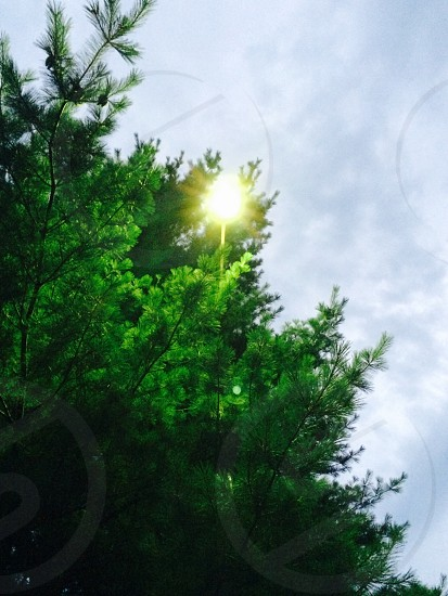 Lamplight through greenery  photo