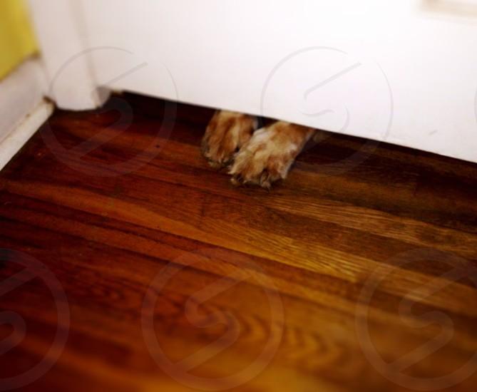 brown wooden parquet floor photo