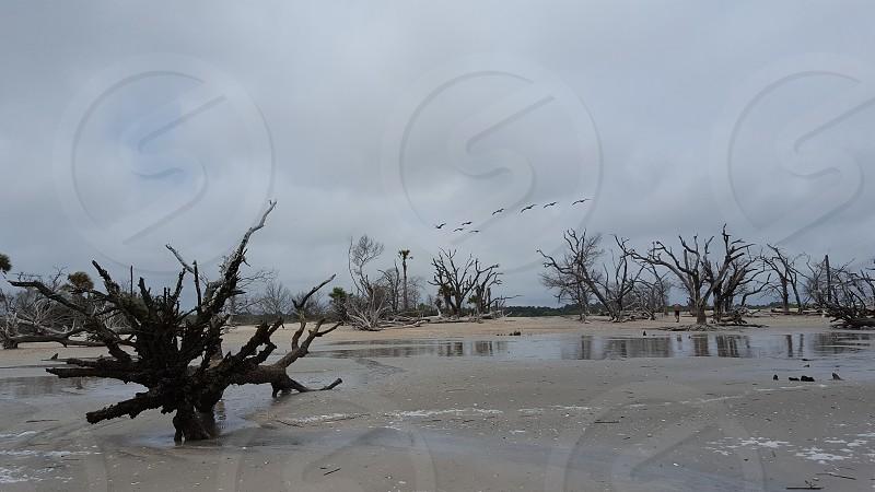 botany bay boneyard beach photo