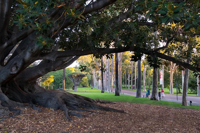Perth kings park 2017 Western Australia photo