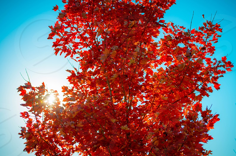 Red and Orange Tree Leaves under Sun photo