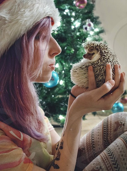 Link the hedgehog loved Christmas.  This is to sort of commemorate him and his last Christmas with us.  We love you Link photo
