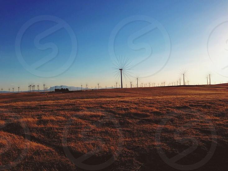 wind turbines on field photo