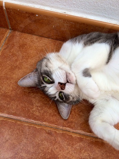 gray and white cat photo