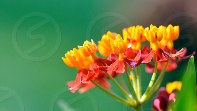 Tiny colorful flowers photo