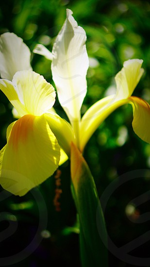 macro photography of white and yellow petaled flower photo