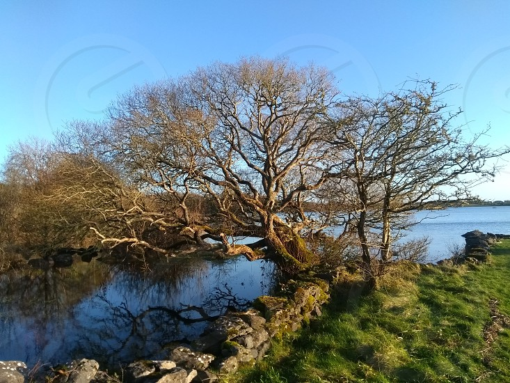 A tree in the Republic of Ireland photo