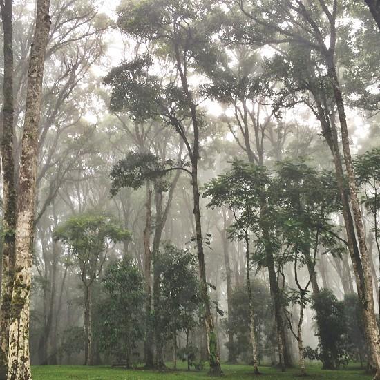 Misty forest fog botanical garden clouds rain mood photo