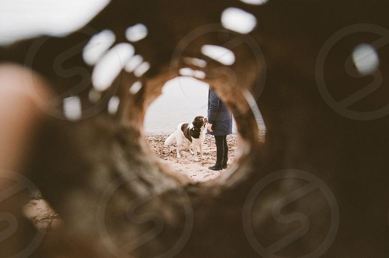 Circle round bark dog photo