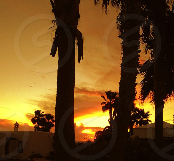 Orange summer palm trees silhouette photo