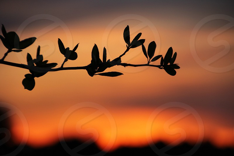 tree branch silhouette in front of sunset view macro photography photo