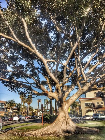 Trees are amazing. photo