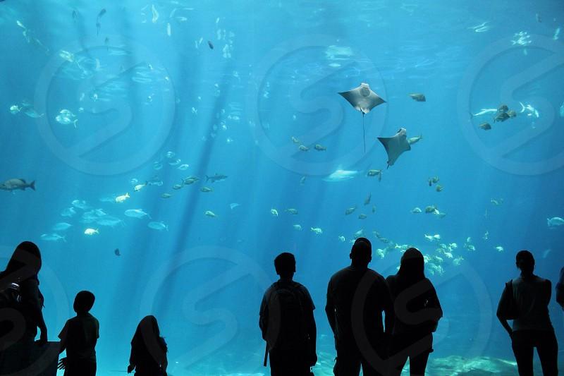 people at fish tank photo