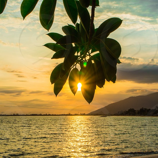 green leaf plant with a background of sunrise and body of water photo