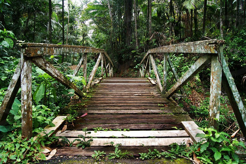 Old abandoned bridge at a forest. Green vegetation nature. photo