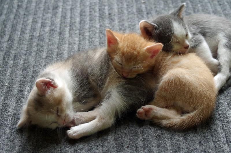 Three little kittens sleeping photo