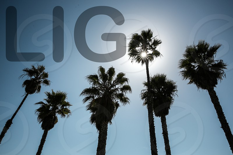 Life Is Good Palm Trees photo