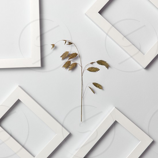 Vegetative natural composition with empty frames for your text and organic leaf branch on a light gray background. Top view. Greeting card. photo