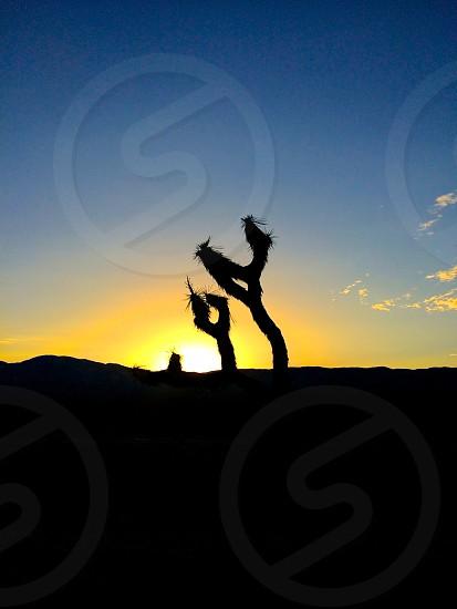 California high desert sunset photo