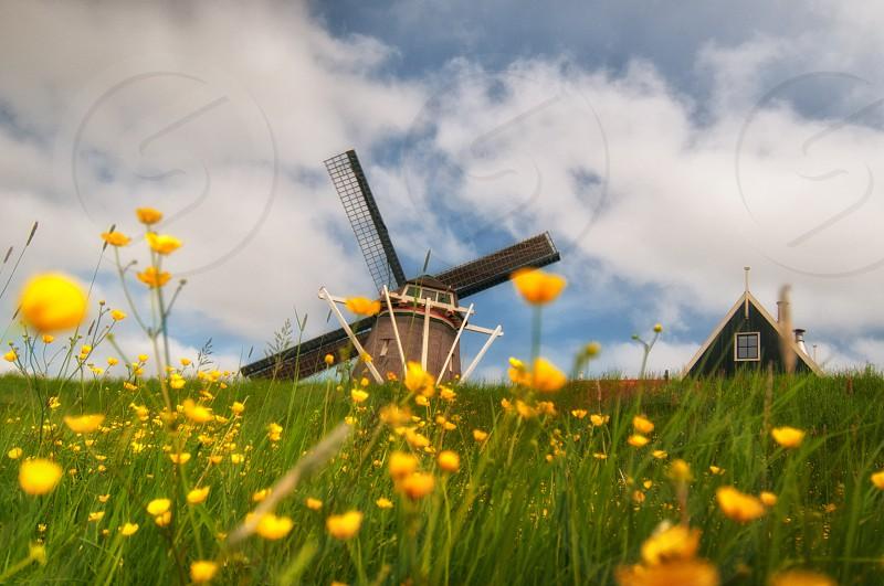 windmill flowers landscape photo