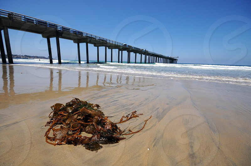Seaweed washed up on the beach at Scripps Pier at La Jolla shores in San Diego California photo