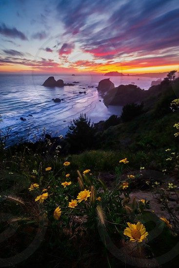 Flowers in the foreground of a beautiful sunset at a rocky beach in Northern California. photo