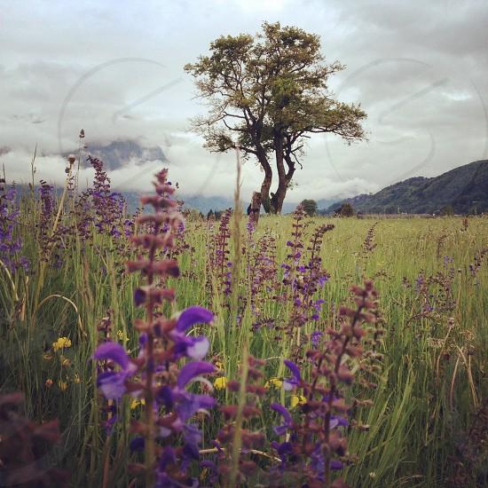 purple and grey photo