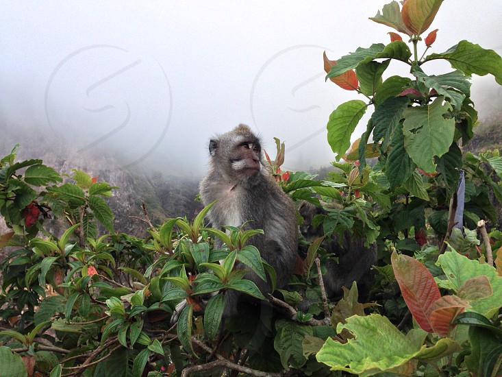 Wild monkey sitting in the trees of a foggy forrest photo