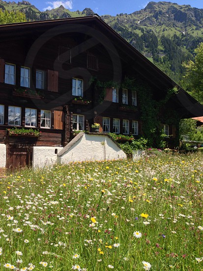 Traditional wooden house in front of Swiss Alp mountains among  field of wild flowers.  photo