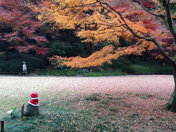 person sitting near the tree photo