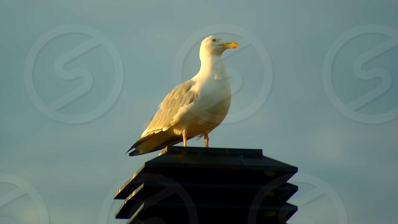 Bird at sunrise photo
