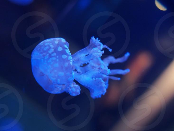 Azul photo