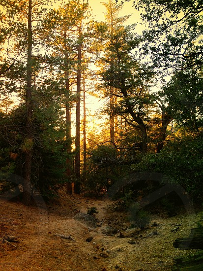 Idyllwild California pine cove photo