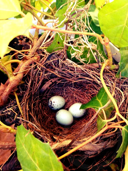 Nest of eggs handle with care photo