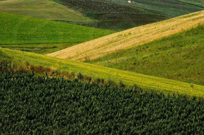 green trees on hill photo