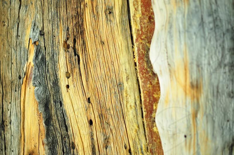 bark tree cracks texture old older inner photo