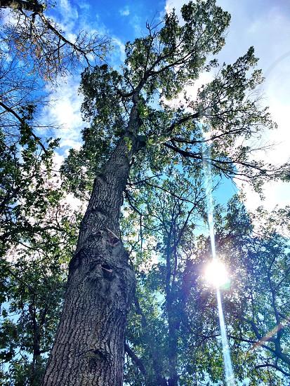 Tree sun lens flare photo