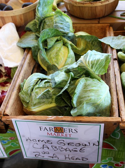 Cabbages at farmers market photo