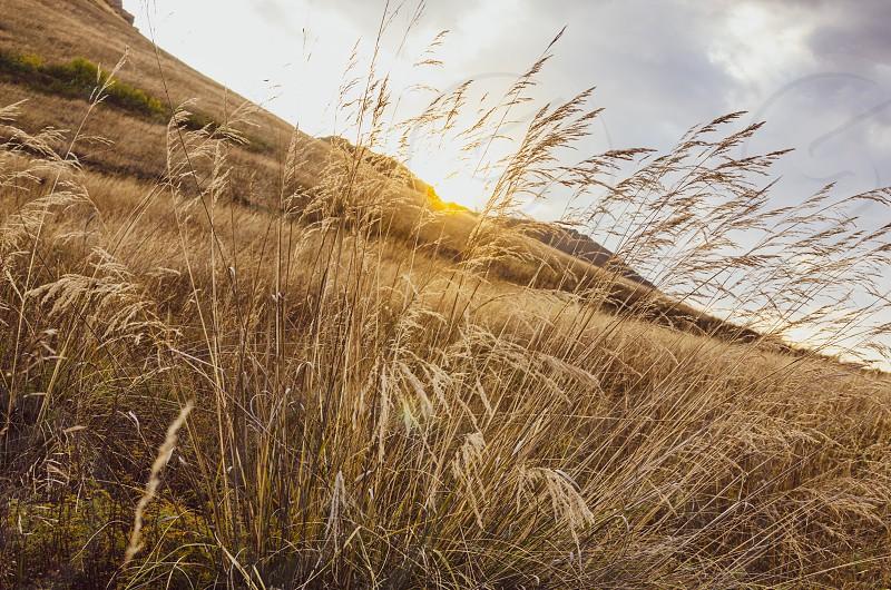 autumn sunset grass hillside photo